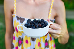 A bowl of blackberries. Royalty Free Stock Images