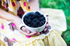 A bowl of blackberries. Royalty Free Stock Photo
