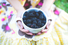 A bowl of blackberries. royalty free stock photography