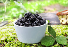 Bowl with blackberry fruits. Bowl with fresh  blackberry fruits Stock Image