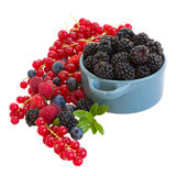 Bowl of blackberry with other  berries Royalty Free Stock Photos