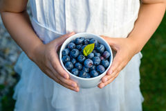 Bowl with blueberries in child hands royalty free stock images