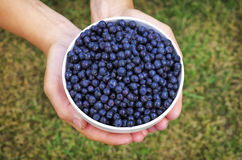 A bowl of blueberries Stock Images