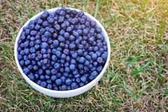 A bowl of blueberries Stock Photos