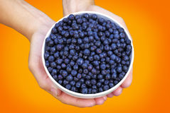 A bowl of blueberries in hands Royalty Free Stock Photography