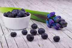 Bowl of blueberries. And hyacinth Stock Photography