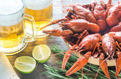 Bowl of boiled crayfish with two mugs of beer Royalty Free Stock Photography