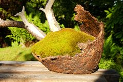 Bowl for bonsai Royalty Free Stock Photos