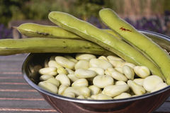 Bowl of broad beans and pods Stock Photo