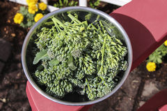 Bowl of Broccolini Royalty Free Stock Images