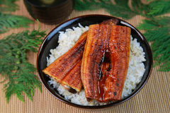 Bowl of broiled eel stock photography