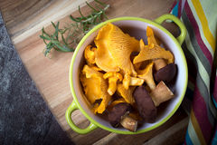 Bowl with cantharellus. Yellow chanterelle and boletus Royalty Free Stock Images