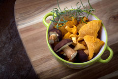 Bowl with cantharellus. Yellow chanterelle and boletus Royalty Free Stock Photo