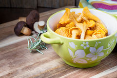 Bowl with cantharellus. Yellow chanterelle Royalty Free Stock Photography