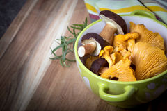 Bowl with cantharellus. Yellow chanterelle and boletus Stock Photo