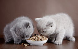 Bowl with cat food and two kittens. Bowl with cat food and two eating kittens stock photography