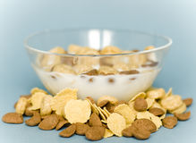 Bowl with cereals. Isolated on a  blue background Stock Image