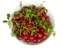Bowl of cherries Stock Photography