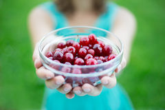 Bowl of cherries in female hands Stock Images