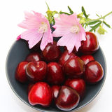 Bowl of cherries and pink flowers, isolated on white. Royalty Free Stock Photography