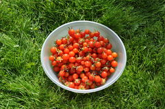 Bowl of cherry tomatoes Royalty Free Stock Image