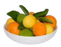 Bowl of Citrus Fruits. Stock Photos