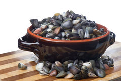 Bowl of clams Royalty Free Stock Photo