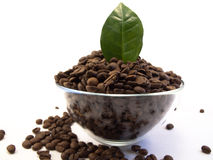 Bowl of Coffee Beans with Coffee Leaf Stock Photography