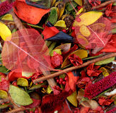 Bowl of Colourful Potpourri Stock Images