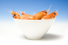 Bowl of cooked prawns Royalty Free Stock Photo