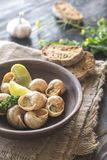Bowl of cooked snails Stock Images