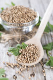 Bowl with Coriander Seeds Royalty Free Stock Photography