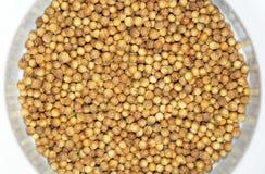 Bowl of coriander seeds Stock Image