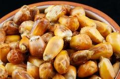 Bowl of corn Royalty Free Stock Image