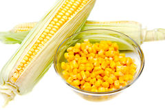 Bowl of corn and cobs Royalty Free Stock Images