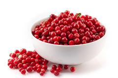 Bowl of cowberries. On a white background Stock Photo