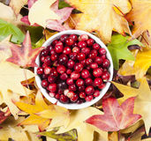 Bowl of cranberries Royalty Free Stock Images