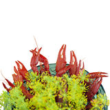 Bowl of crayfish Royalty Free Stock Image