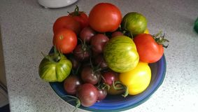 Bowl of different tomatoes Royalty Free Stock Photography