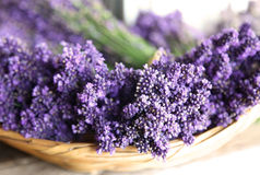 Bowl of Dried Lavender Flower Plant. A bowl of dried lavender flowers and plants Royalty Free Stock Photo