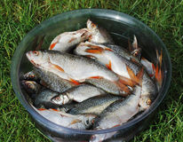 Bowl with a fish . Royalty Free Stock Photo