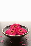 Bowl of flower heads on slate Stock Image