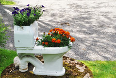 Bowl flowerpot with flowers in the garden Stock Image