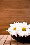 Bowl with flowers. On wood background Royalty Free Stock Photos