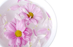 Bowl with flowers Royalty Free Stock Photo