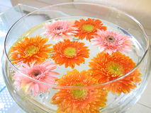 Bowl of flowers Stock Images