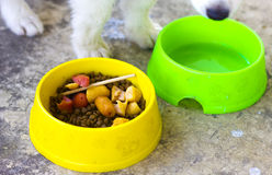 Bowl with food for dog. Dog eating in vivid-colored container Stock Image