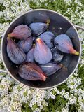 Bowl Fresh Black Mission Figs Stock Images