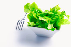 Bowl of fresh butter lettuce Royalty Free Stock Photos