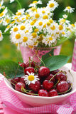 Bowl of fresh cherries Royalty Free Stock Photos